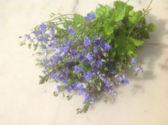 Pretty Flowers, Purple Flowers, My Flower, Outdoor Gardens, Tulips, Delicate, Pastel, Herbs, Rose