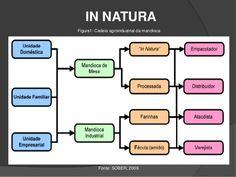 Processamento industrial e produtos da mandioca