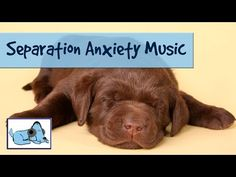 30+ minutes of relaxing dog music. Calming sounds to relax anxious dogs - separation anxiety cured! - Canine Separation Anxiety