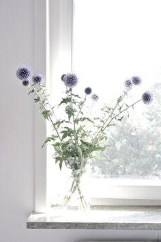 #irishThistle #flowers #labola.co.za