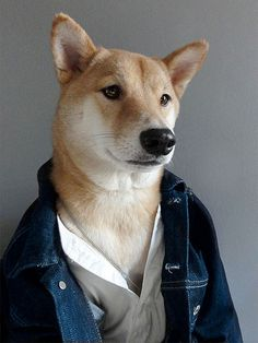 """Film Fashion: Stealing Ryan Gosling's Look In """"Drive"""" Silent, stoic, and devastatingly handsome; Ryan Gosling's character in Drive may be one of the most stylish men in modern cinema. Shiba Inu, Dog Dresses, Nice Dresses, Menswear Dog, Funny Animals, Cute Animals, Pretty Animals, The Style Council, Dog Presents"""