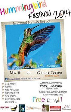 Evento de Día Internacional de las Aves Migratorias Festival de Colibrí; Todos Santos B.C.S. México.  International Migratory Bird Day event Hummingbird Festival; Todos Santos Baja California Sur, México. #BirdDay