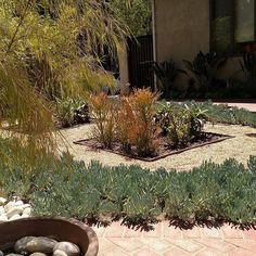 Private Client #droughttolerantplants #waterwisegardening #conservation #mindfulness #gardening #green #designs #landscape #outdoorart #gardenasart #artofliving #arts #botany #plantpalettes #sculpture by thegivinggame1merrileemarks #waterwise #waterwisegardening #drought #droughttolerant