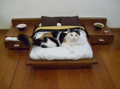 coolest cat bed ever?