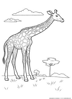 1000 images about wild animals pages on pinterest wild animals coloring pages and animal. Black Bedroom Furniture Sets. Home Design Ideas