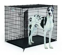 MidWest Extra Large Dog Breed (Great Dane) Heavy Duty Metal Dog Crate w/ Leak-Proof Pan Double Door Giant Dog Crate measures x x Inches & Weighs lbs. Extra Large Dog Breeds, Extra Large Dog Crate, Large Dogs, Small Dogs, Medium Dog Crate, Medium Dogs, Dog Playpen, Pet Kennels, Xxxl Dog Crate