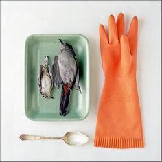 Still life series titled Domestic Arrangements by New Jersey photographer Kimberly Witham. via who killed bambi Orange Gloves, Still Picture, New York Art, Small Birds, Birds Eye View, Still Life Photography, Bird Art, Bird Feathers, Be Still