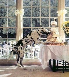I hope Jax doesn't do this at our wedding!!