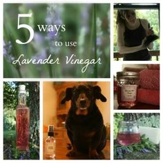Five Uses for Lavender Vinegar,  gather lavender, rub the buds off into a jar, then cover with heated vinegar. Immediately cap to keep the vapors in. Store in a dark cabinet for a few weeks, shaking periodically. If you don't have fresh lavender, just can buy dried from Mountain Rose Herbs.