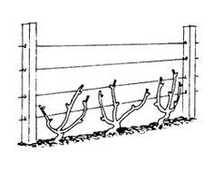 35 Best Trellis Ideas Images Trellis Garden Trellis Garden