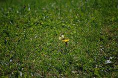 lil butterfly