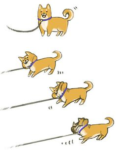 Kura the Shiba Inu: Shiba Cartoon