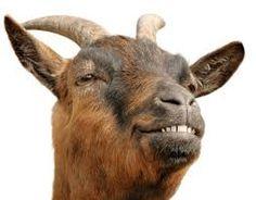 Image result for cabra