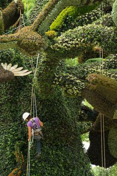 a horticulture competition featuring over 40 living plant sculptures is exhibiting at the montreal botanical gardens, promoting the environment through art.
