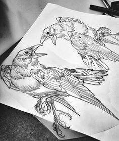 Line work raven tattoo