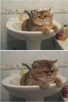 Tubby cat in bathroom sink.