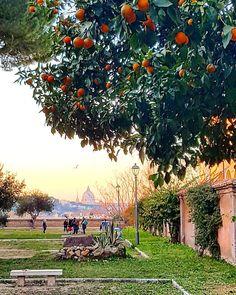 Roma: Giardino degli Aranci ♠ photo by paolosunrise • Instagram