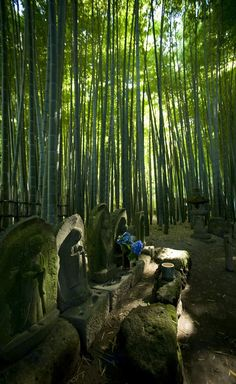 Jomyo-ji temple, Kamakura, Japan   Bamboo... Peaceful  Quiet  Cool   Spiritual