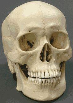 human skull real angle