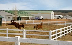 Harmony Equine center.  Rescue horses with friends, in a nice clean pen... kicking up his heels!