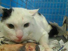 URGENT! ON THE SUN., JUNE 2, 2013 NYCACC EUTHANASIA LIST! 2 year old BUBBA needs out of NYCACC NOW!!! TO BE DESTROYED 6/2/13 Brooklyn Center  My name is BUBBA. My Animal ID # is A0966660. I am a male white and black white. The shelter thinks I am about 2 YEARS old.  I came in the shelter as a STRAY on 05/28/2013 from NY 11221, owner surrender reason stated was STRAY.