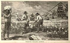 Voici une image montrant des esclaves noirs au travail dans un champ de coton. L'esclave étant le point central de la culture des Indiens du Mardi Gras, nous nous devons de présenter cette image.