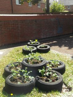 Check out Banana Moon Heanor who have recycled old tyres and are now growing; Strawberries, potatoes and radishes!