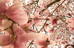 tumblr_mmohjo64fa1s5pa33o1_500.jpg 500×332 pixels