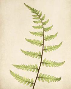 Fern Art Print - fine art botanical print by Allison Trentelman | Rocky Top Studio