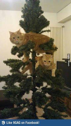 My Christmas tree ornaments.