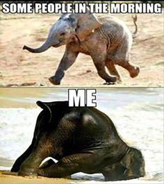 Lustige Tiermemes - Funny animal memes make me laugh - Funny Animal Jokes, Crazy Funny Memes, Really Funny Memes, Cute Funny Animals, Stupid Funny Memes, Funny Animal Pictures, Funny Relatable Memes, Cute Baby Animals, Funny Dogs