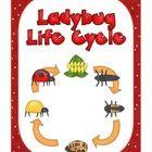 Life Cycle ~ Ladybug