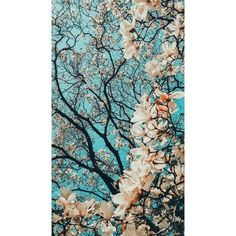 In Signs of Spring Canvas Wall Art by Masterpiece Art Gallery, the delicate pink petals of the cherry blossom tree stand out beautifully against a deep blue sky. Perfect for home or office decor, this canvas print is sure to turn heads. Pastel Wallpaper, Cool Wallpaper, Wallpaper Backgrounds, Phone Backgrounds, Canvas Wall Decor, Home Decor Wall Art, Aesthetic Iphone Wallpaper, Aesthetic Wallpapers, Coco Chat