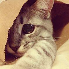 Pretty in a Paper Bag