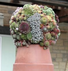 And make an odd garden topiary.