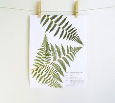PRINT of Pressed Fern Herbarium Specimen Art by DayThreeCreations, $10.00