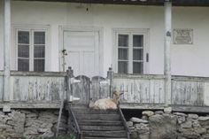 Casa natală Nicolae Labiş