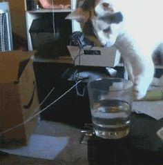 Cats knocking stuff over