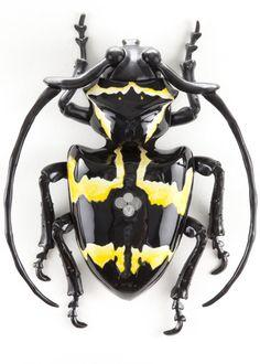 Cerambycidae Pecuniara Extracursus
