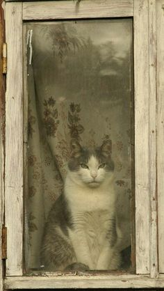 ༺ღ༻ Cat in the Window ༺ღ༻