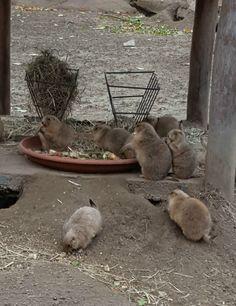 praeriehunde-vogelpark-marlow