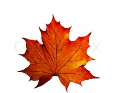 Gallery For > Autumn Leaf