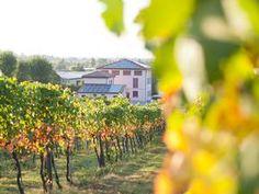 Agriturismo Le Stanze di Bacco (Monteveglio)  http://www.agriturismo.st/it/Italia/Emilia-Romagna/Bologna/Le-Stanze-di-Bacco-24179/