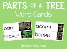 Here isa set of Parts of a TreeWord Cards that I have added to thePicture Word Cards collection. This set includes words such as trunk, bark, leaves, blossoms, and more! Usingthe cards in theclassroom: Theseword cards can be placed ina pocket chart in my writing center, or they can be hooked together with binder rings …