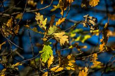 Herbstblätter | Flickr - Fotosharing! Photography Photos, Explore, Photos, Fall Leaves, Exploring