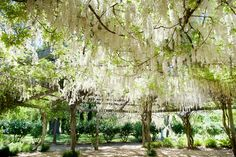 The Tuscan Garden in Spring  http://www.locallygrownweddings.com/wptest/wp-content/uploads/2012/05/Campovida-009-5849.jpg