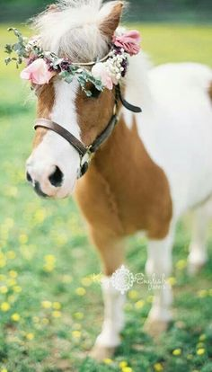What a cute idea - have your ring barer and flower girl pulled down the aisle in a cart with a mini pony. Cute Horses, Pretty Horses, Horse Love, Beautiful Horses, Animals Beautiful, Mini Horses, Mini Pony, Cute Baby Animals, Animals And Pets