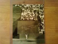 WILLIE MAYS (THE CATCH) Signed 8x10 photo MLB San Fransisco Giants. http://yardsellr.com/yardsale/Erik-Marx-416944