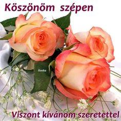 Vegetables, Rose, Flowers, Plants, Pink, Roses, Vegetable Recipes, Flora, Plant