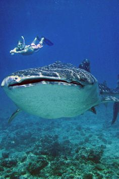 Swimming with Whale Sharks — Cancun, MX